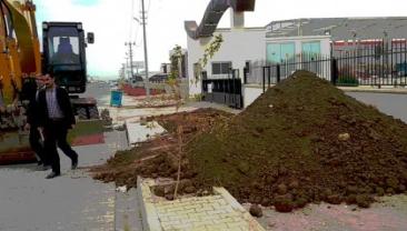 Gaziantep Şanlıurfa Karayolu Ağaçlandırma