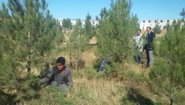Sanayi İçerisindeki Bütün Park Ve Ormanlıklar Ve Ağaçlarımıza Bakım Çalışması