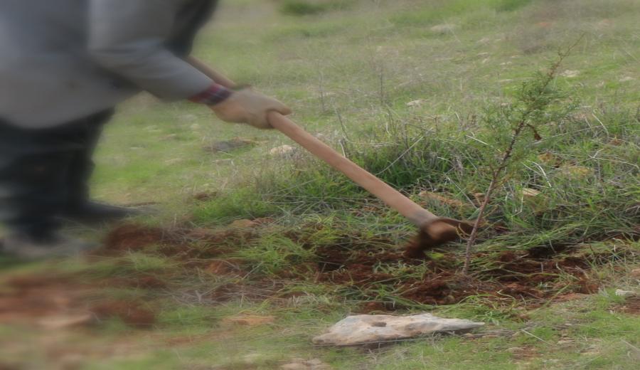 Daha Yeşil Bir OSB İçin Ağaçlandırmaya Devam